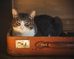 A cute tabby house cat sits in an old vintage orange suitcase with a disgruntled face and does not want to leave the house.