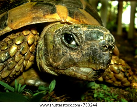 A cute turtle looking at  the camera