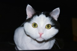 A cute white cat with black spots and green eyes looks interested in the camera.