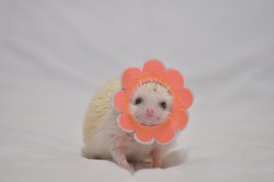 a cute white hedgehog with a pink flower hat that is smiling to a camera