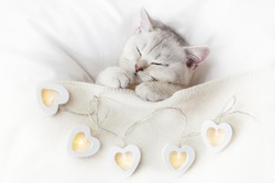 A cute white kitten sleeps on a white bed under a knitted blanket with glowing garlands in the form of hearts.