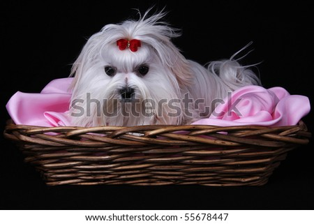 cute black and pink backgrounds. stock photo : A cute white