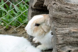 A cute white rabbit in a hollow tree