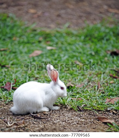 A cute young white rabbit in it's natural habitat.