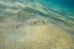 A cuttlefish hidden in the sand on the seabed, underwater in the Mediterranean sea, France