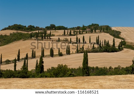 A cypress lined road in Tuscany, Italy