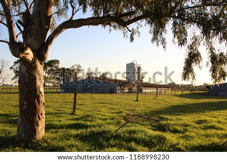 A dairy farm in a rural area at sunset. Peaceful countryside scenery. #1188998230