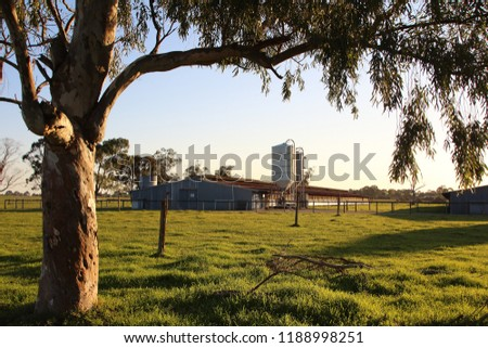 A dairy farm in a rural area at sunset. Peaceful countryside scenery. #1188998251