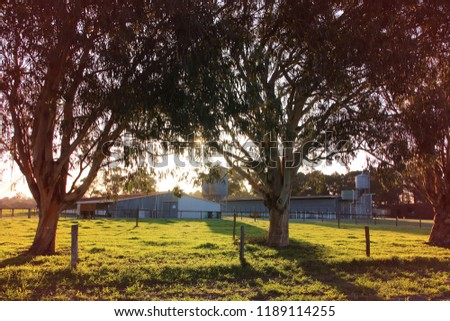 A dairy farm in a rural area at sunset. Peaceful countryside scenery. #1189114255