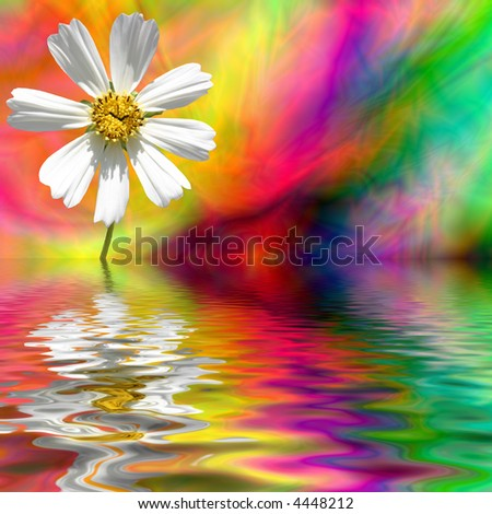 A Daisy reflecting in water with a rainbow background.