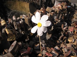 A daisy without petals in the fontain of the padlocks. Tradition of closing metal padlocks to seal the love of couples illuminated by the sun.