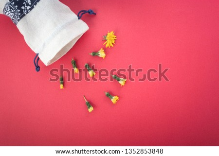 A dandelion parachute ball between other two yellow dandelion flowers. Beautiful dandelion background in white and yellow colors as colorful floral composition.