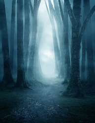A dark and moody forest pathway covered in mist.
