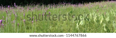 A dark background fades into the bright sunlight meadow full of purple gay feather flowers and brightly colored butterflies. #1144767866
