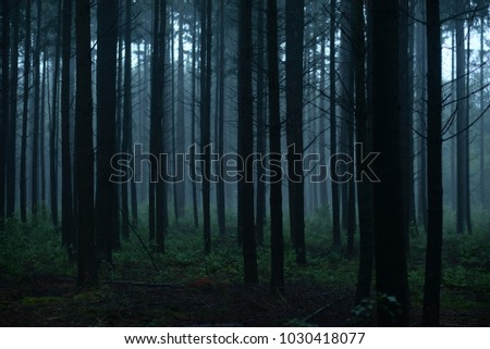 A dark forest with bare tree trunks and a creepy feeling #1030418077