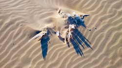 A dead bird partly covered with sand.