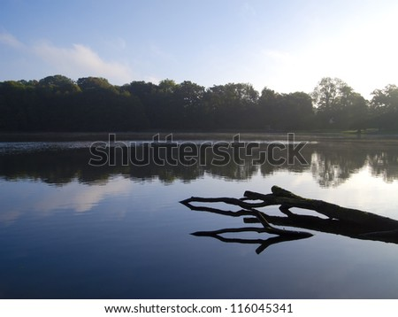 a dead branch reflection in a lake