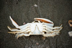 A dead crab in the sand on the beach
