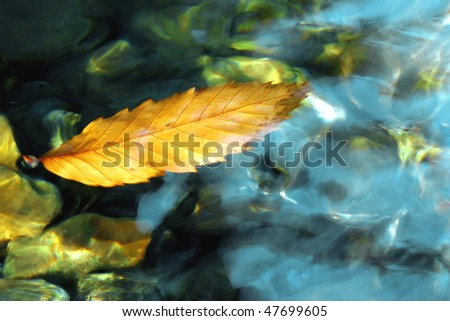 a dead leaf floats in the water of a river