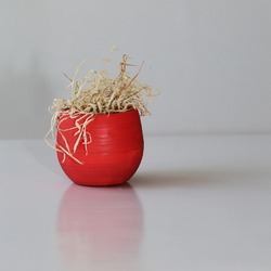 A dead plant in a red pot. A withering flower in a pot. Dry plant on a gray background.