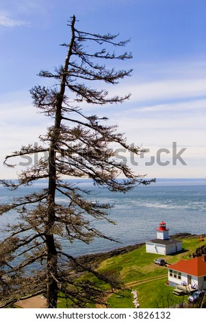 A dead spruce tree overlooking Cape D'Or Lighthouse, in Nova Scotia, Canada.
