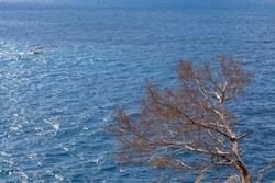 A dead tree agaist the sea in Portofino, Liguria, Italy