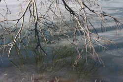 A dead tree limb hanging over the frozen lake