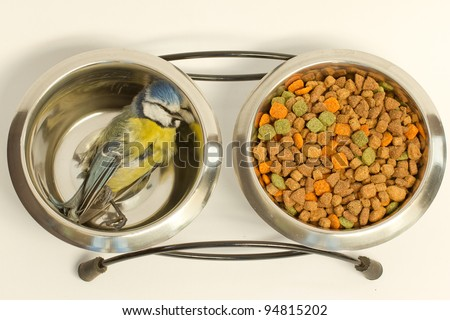 A deceased blue tit in a cat's food bowl