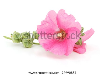 A decorating hollyhock flowers