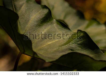 A deep green leathery leaf is curled to show veining and details. The effect is muted and soft.