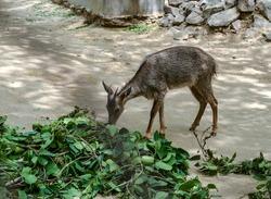 A deer in cage in delhi zoo.