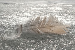 A delicate feathers lie on frozen surface of  sea. The ice glistens silver in sun.