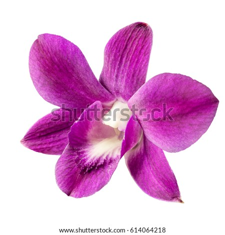 a delicate scarlet pink flower phalaenopsis orchid isolated on white background.