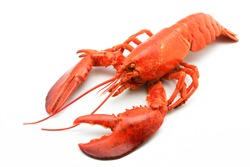 A delicious freshly steamed lobster