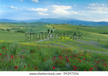 """A delightful track running through the hills of Pienza, Tuscany, Italy, with a field of poppies in the foreground.  This track was used during the filming of """"Gladiator""""."""