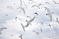 A dense flock of seagulls flying against a cloudy blue sky.