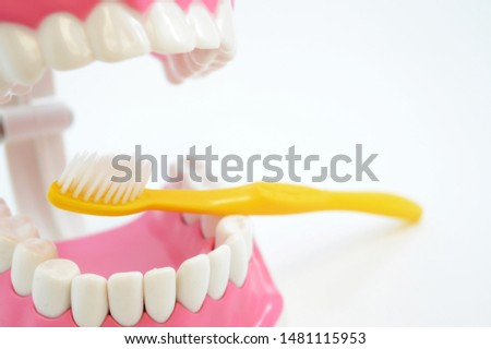 A dentistry display tool to explain how to properly brush your teeth to clients on their visits to the clinic. #1481115953