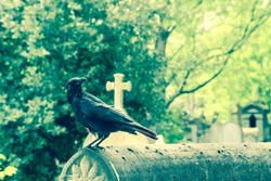 A depressive picture of a crow standing on the grave on a cemetery.