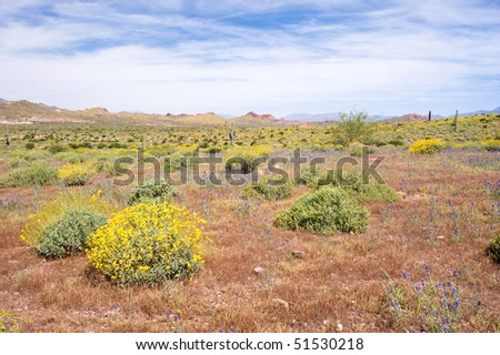 A desert landscape with a bright blue and white sky during springtime.