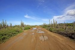 A desert road on the north side of Bonaire