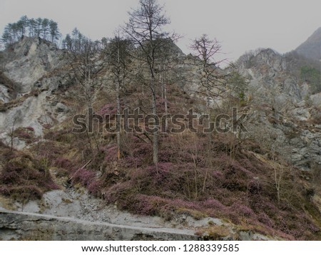 a deserted gray rocky landscape covered with spruce and spruce spruce and pine trees that have been damaged. A region like the moon #1288339585