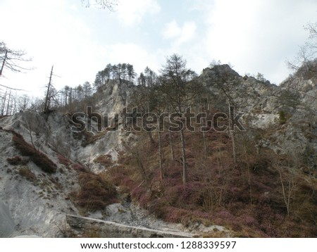 a deserted gray rocky landscape covered with spruce and spruce spruce and pine trees that have been damaged. A region like the moon #1288339597
