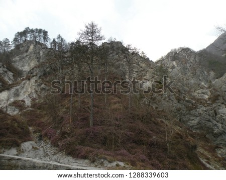 a deserted gray rocky landscape covered with spruce and spruce spruce and pine trees that have been damaged. A region like the moon #1288339603