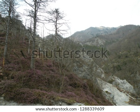 a deserted gray rocky landscape covered with spruce and spruce spruce and pine trees that have been damaged. A region like the moon #1288339609