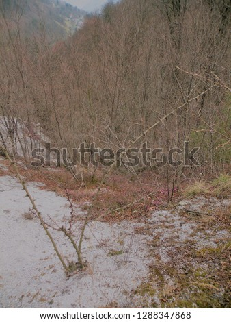 a deserted gray rocky landscape covered with spruce and spruce spruce and pine trees that have been damaged. A region like the moon.Bush with big spikes #1288347868