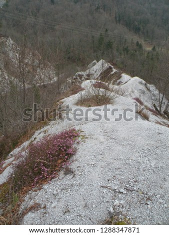 a deserted gray rocky landscape covered with spruce and spruce spruce and pine trees that have been damaged. A region like the moon,big rock #1288347871