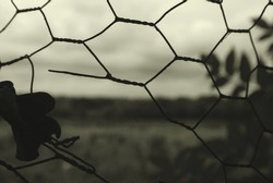 A desolate view of nature is viewed through a hole in a fence