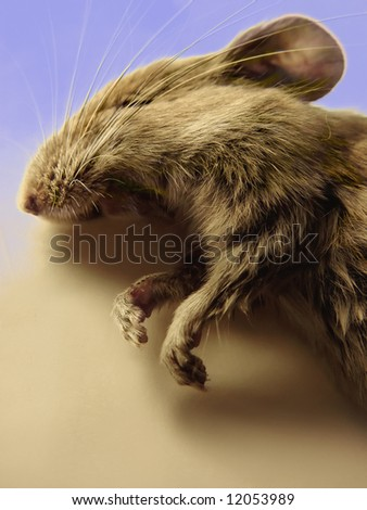 A detailed closeup of a dead deer mouse on a multicolored background