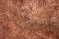 a detailed image of a section of walnut root