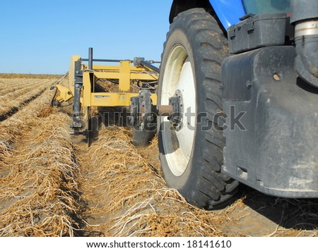 A digging machine harvests russet potatoes in Idaho.